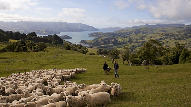 Banks Peninsula Farm New Zealand